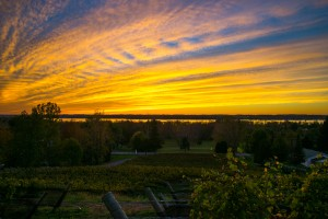 Estate Vineyard Sunset