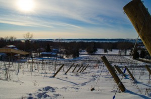 Estate Vineyard Winter